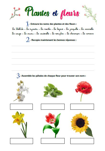 Plantes et fleurs (vignette)