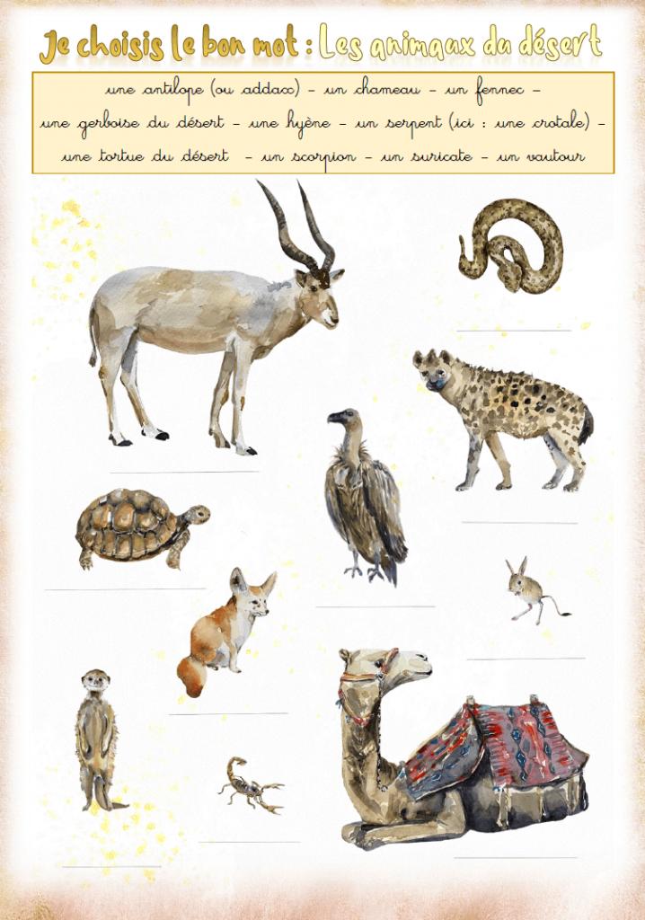 """Illustration de l'exercice : """"Je choisis et je recopie le bon mot : les animaux du désert"""""""
